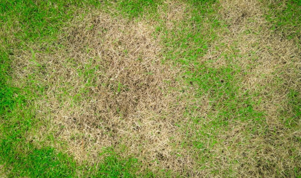 Rasen mit Schäden