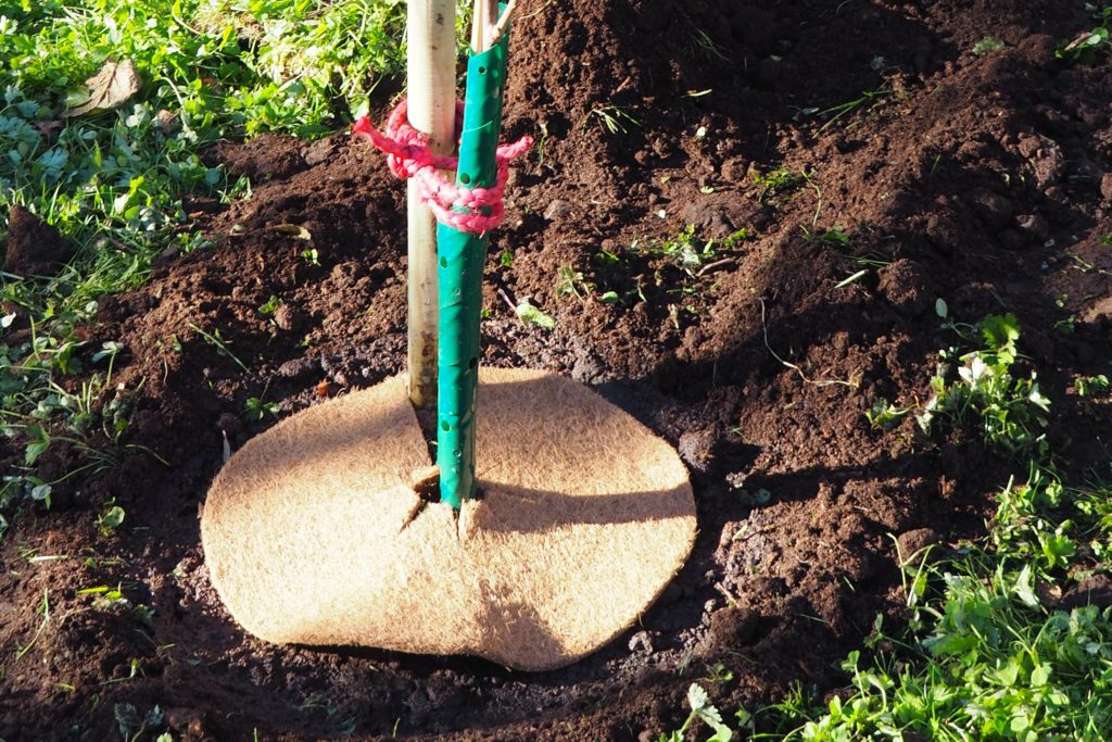 Kokosmatte um den Baum gelegt