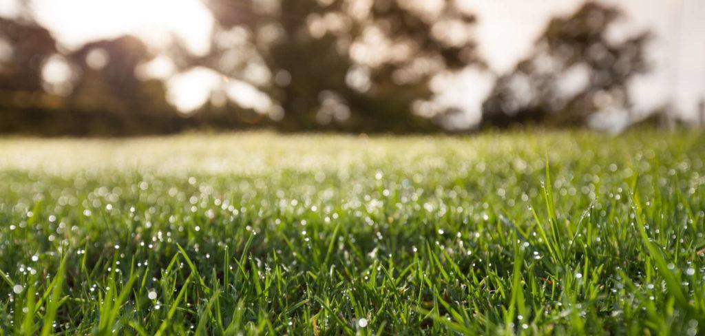 nasser Rasen