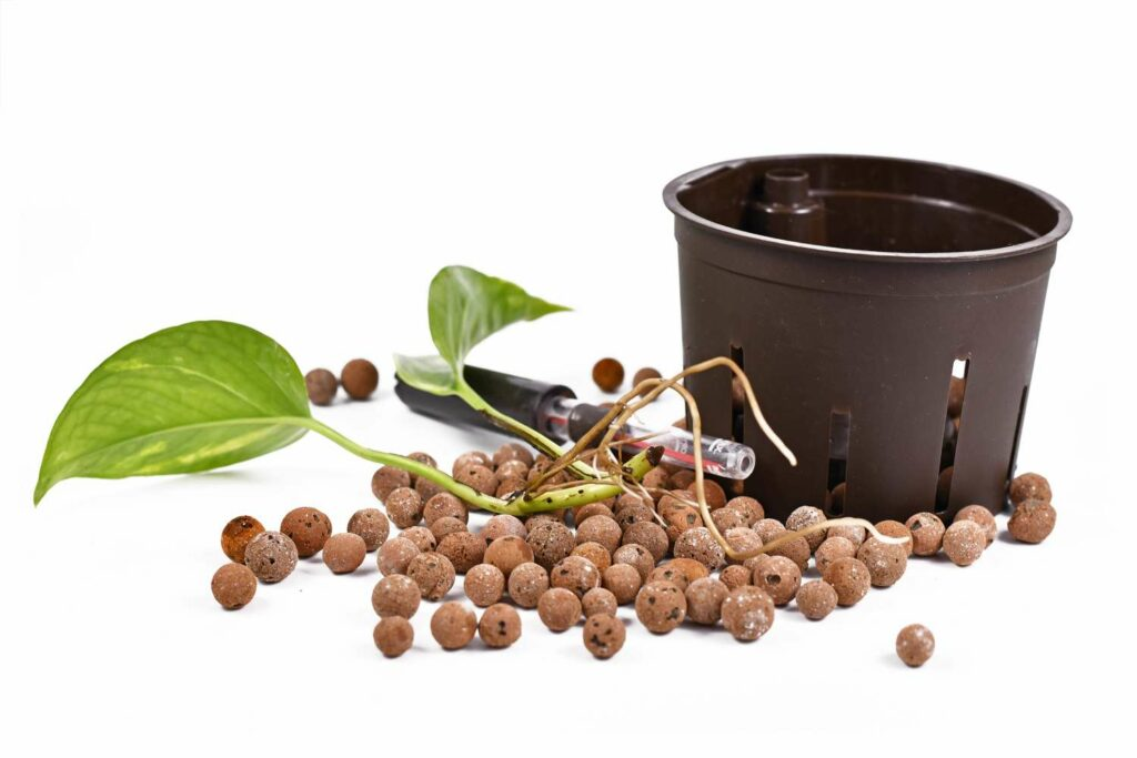Topf und Pflanze und Blähton
