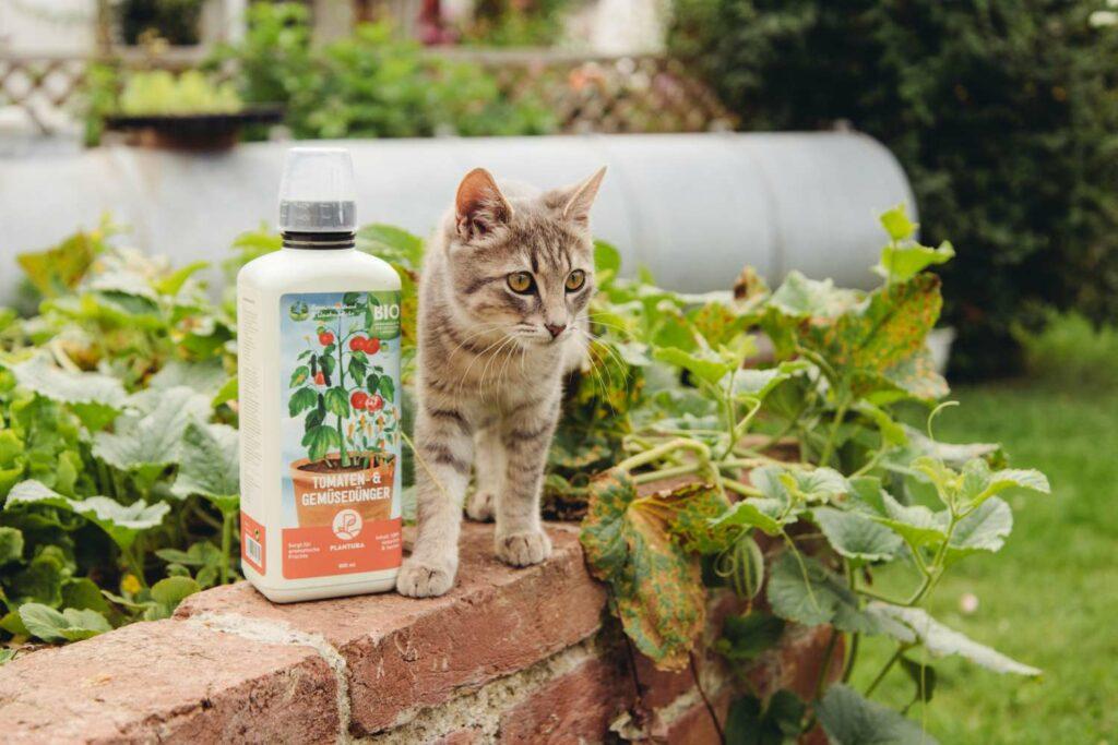 Katze neben Plantura Tomaten- und Gemüsedünger