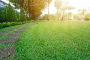 Rasen Im Garten