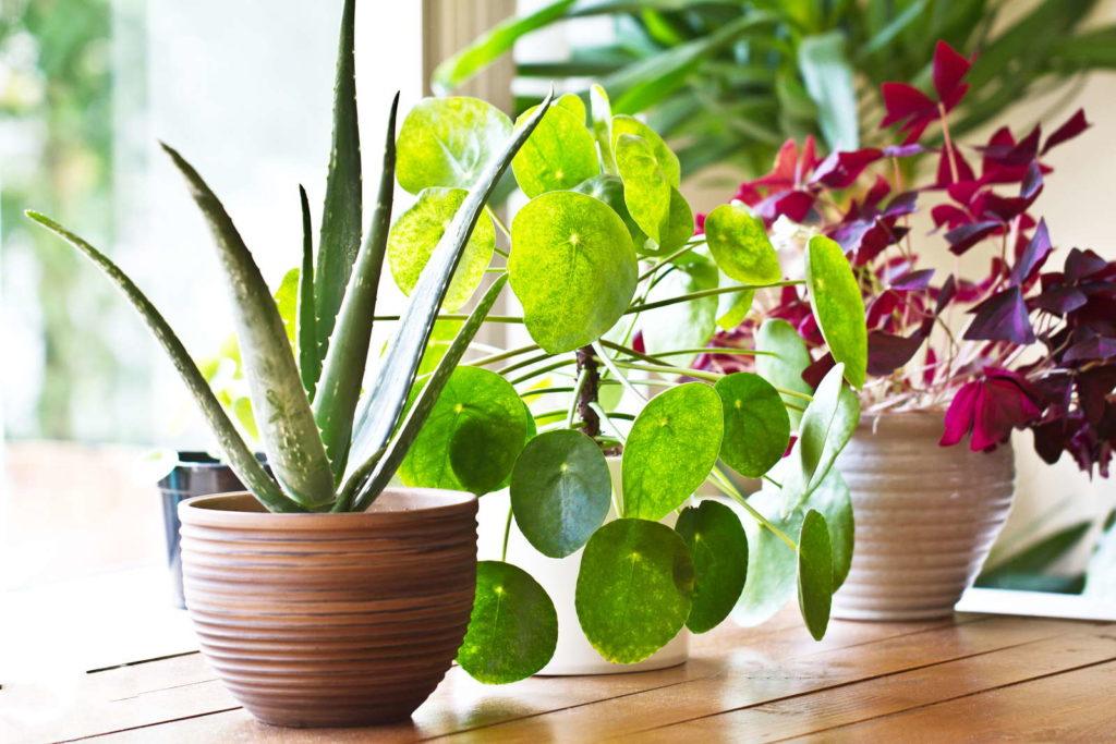 verschiedene Zimmerpflanzen auf einem Fensterbrett