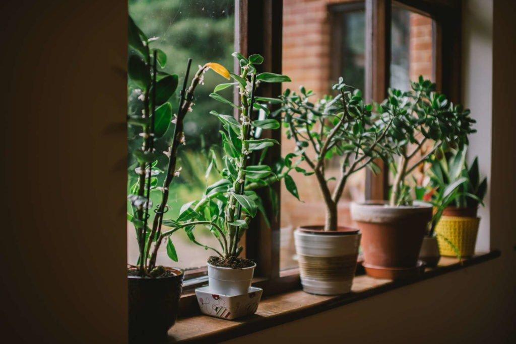 Zimmerpflanzen in Töpfen auf dem Fensterbrett