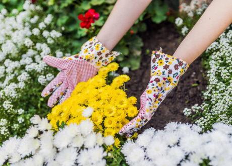 Frau Mit Handschuhen In Einem Blumenbeet