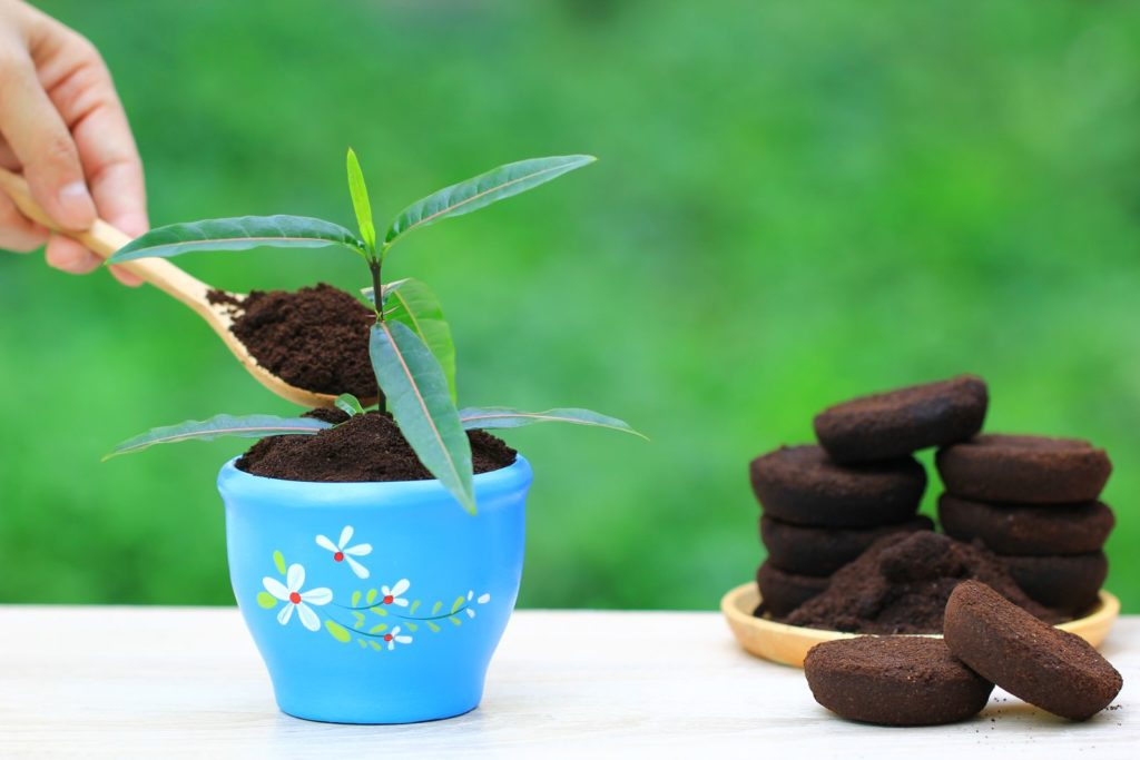 Kaffeesatz Topfpflanze