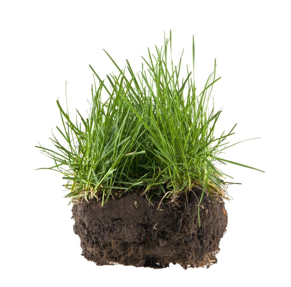 Nahaufnahme eines kleinen Stücks Rasen