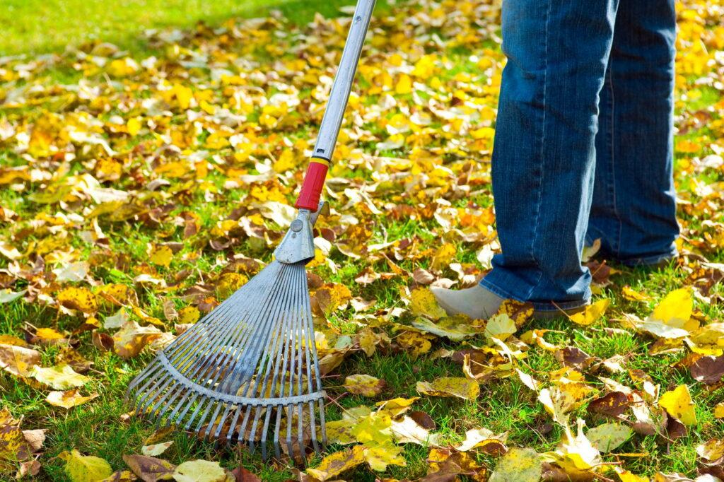 Person recht Laub im Herbst