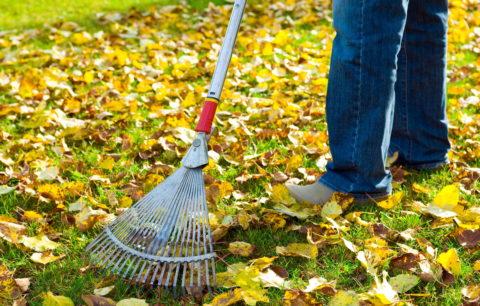 Gärtnern Macht Gesund: Warum Gartenliebe Gut Für Uns Ist