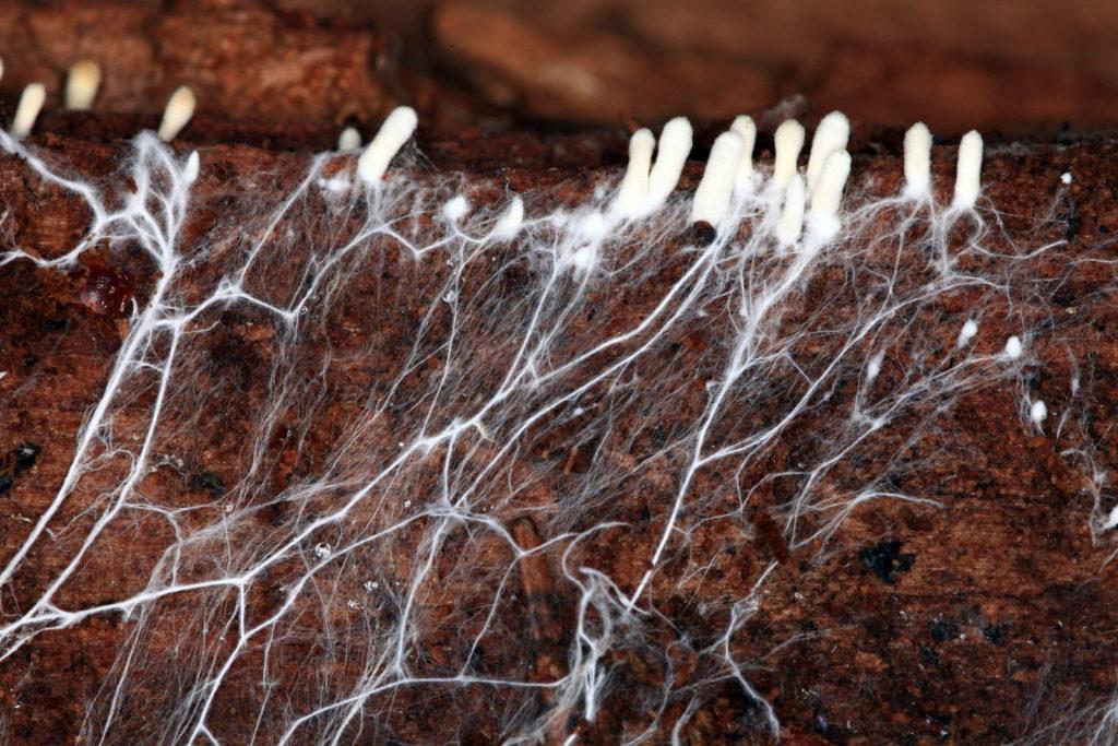 Symbiose von Pilzen und Rasen