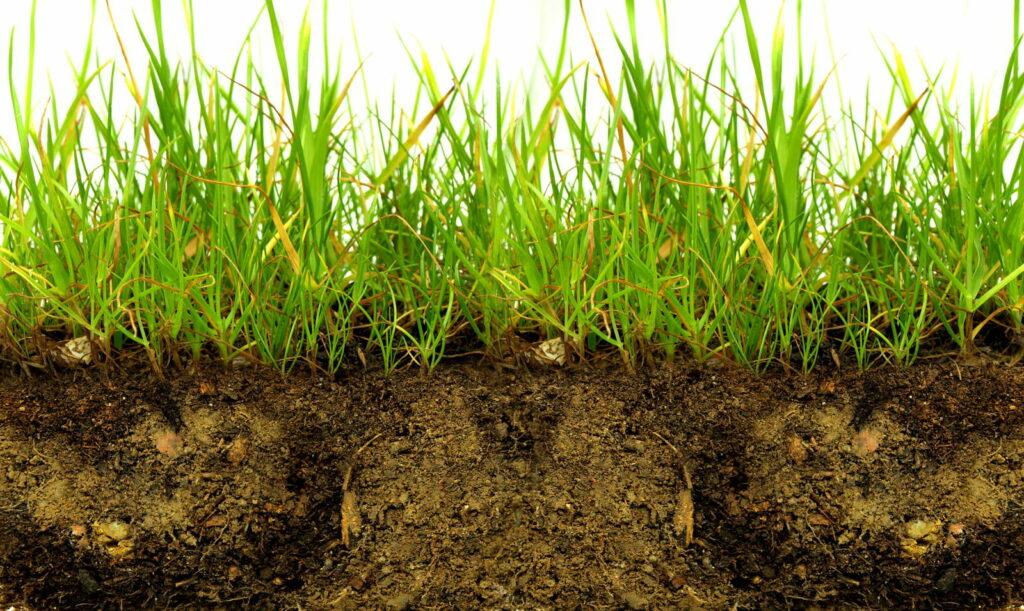 Rasen mit Erde