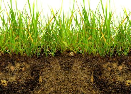Rasen Mit Erde Querschnitt