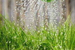 Nahaufnahem Wie Rasen Mit Flüssigdünger Gedüngt Wird