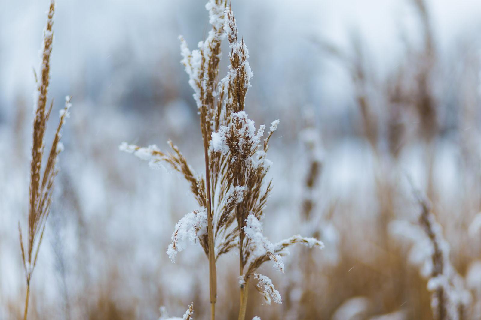 Winterharte Graser Sortenwahl Richtige Pflege Plantura