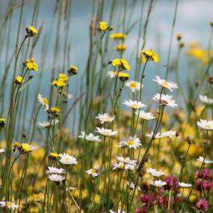 Verschiedene Bunte Blumen Auf Einer Wiese