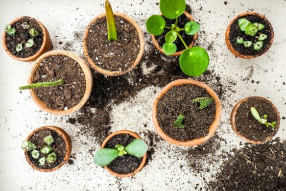 Zimmerpflanzen aus Stecklingen ziehen: Unsere Top 10