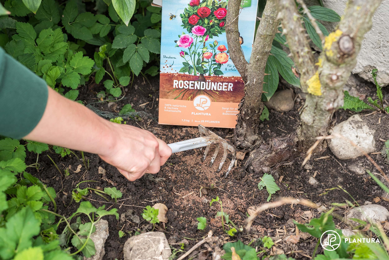 Düngung mit Plantura Bio-Rosendünger