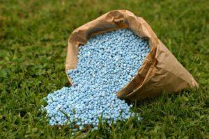 Blaukorn Im Sack Auf Rasen