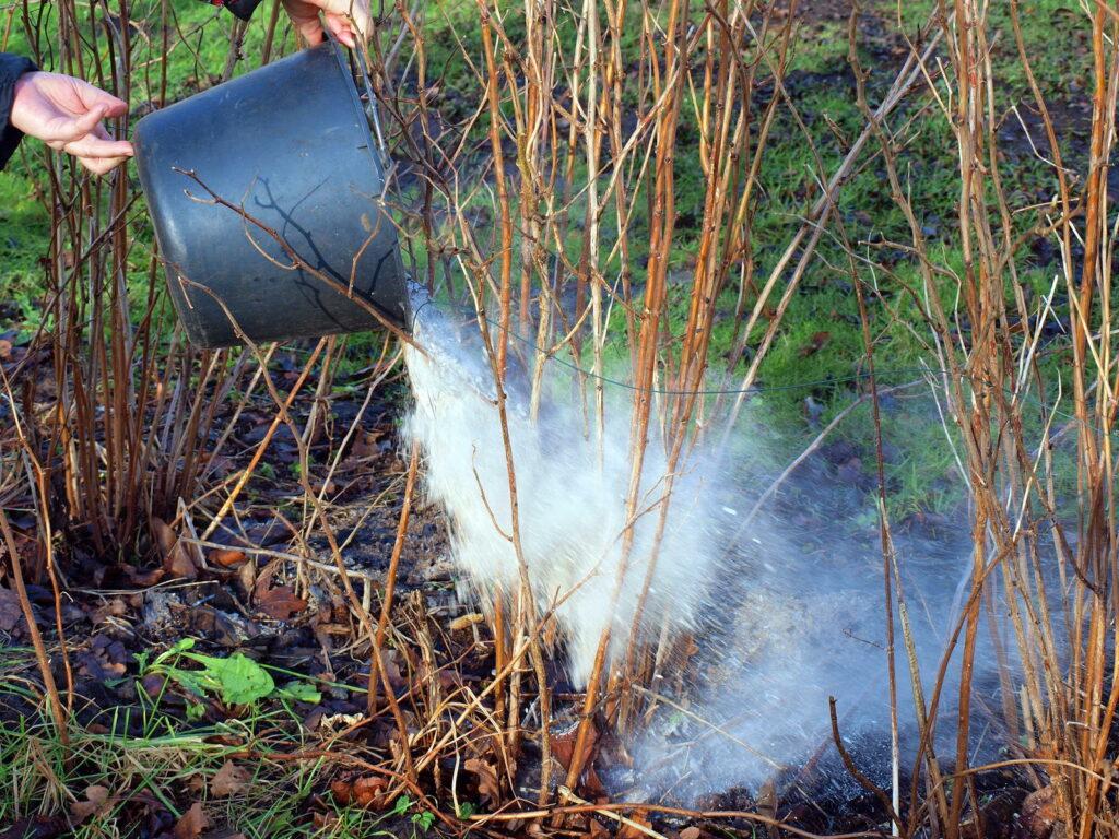 Asche wird in Beet auf Pflanzen gestreut