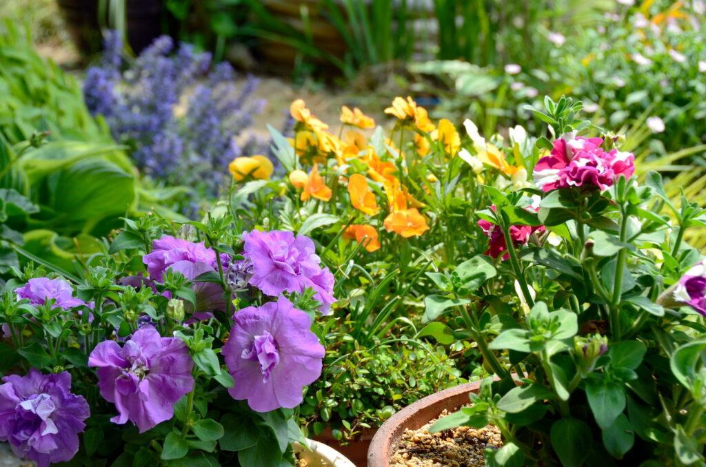 Bunte Blumen im Garten