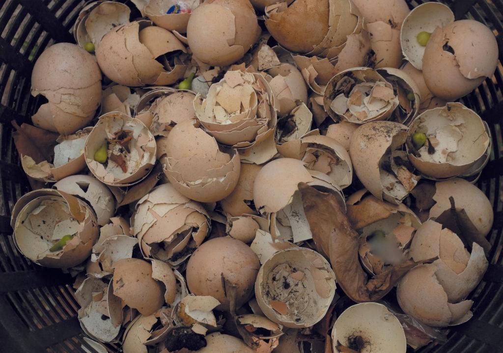 Eierschalen im Korb gesammelt