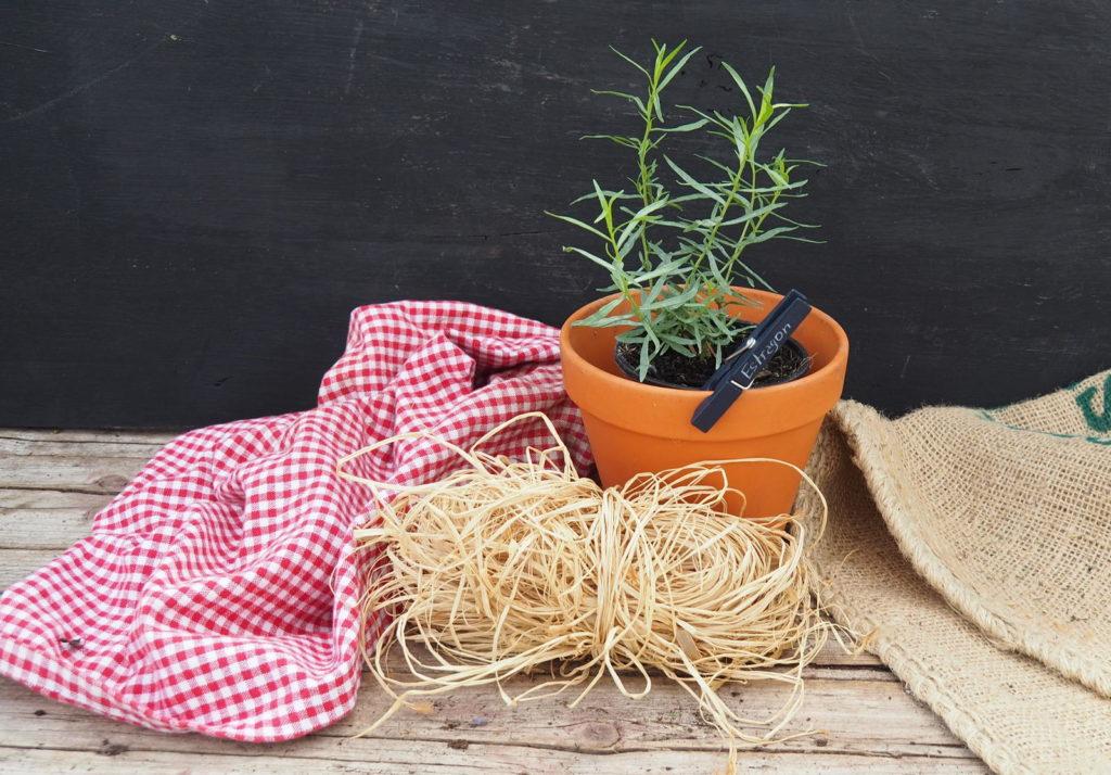 Wäscheklammer an einer Topfpflanze