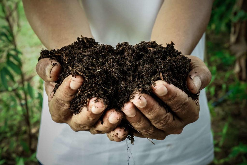 Kompost in den Händen eines Mannes