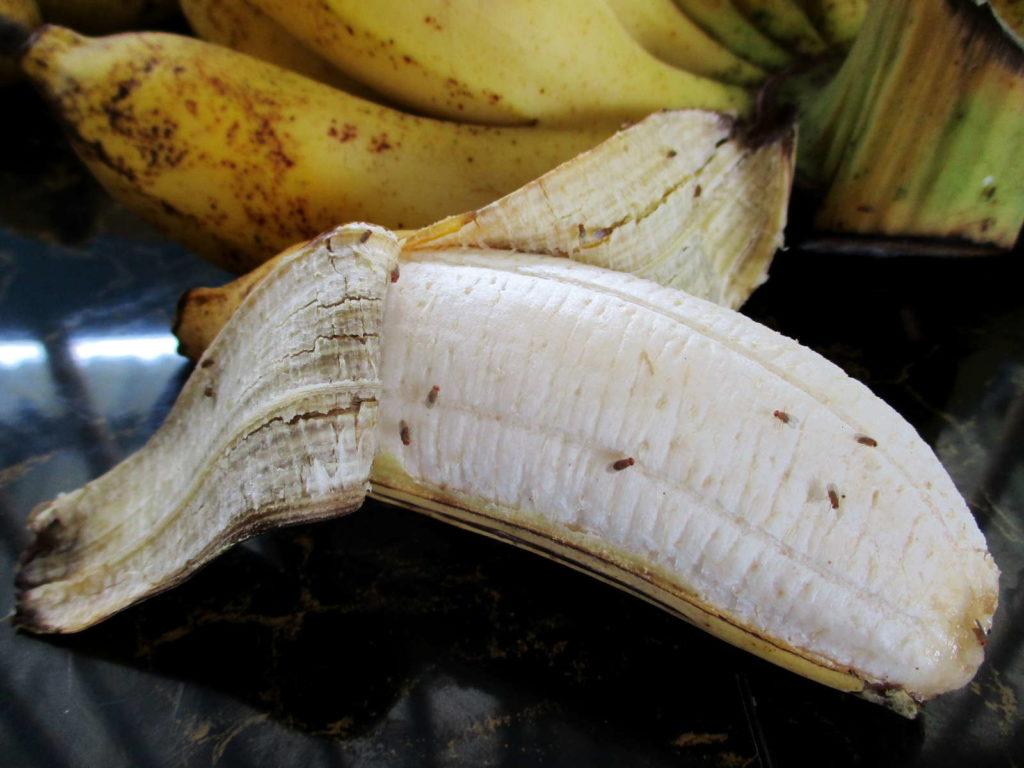 Fruchtfliegen auf einer offenen Banane