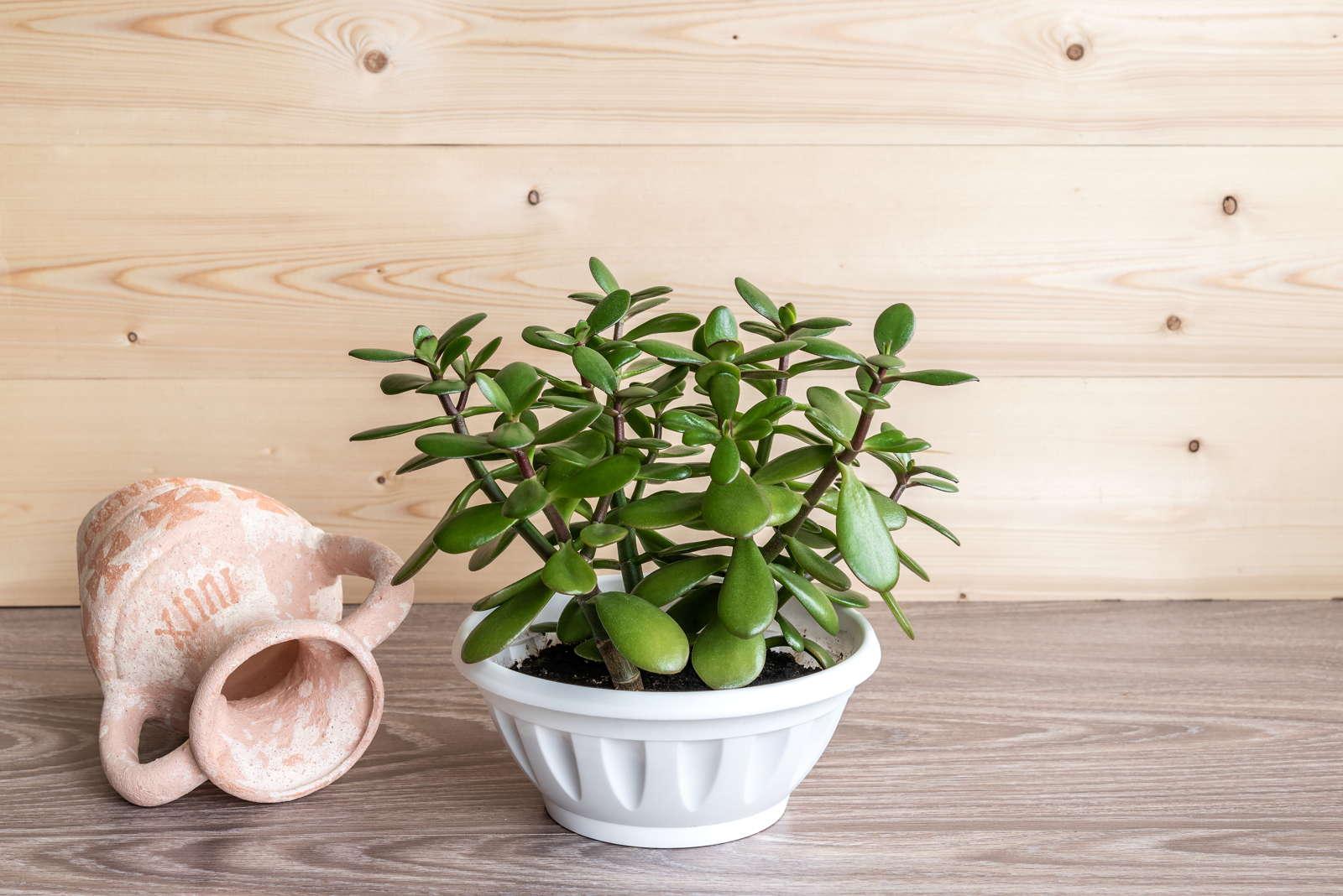 Pflegeleichte Zimmerpflanzen Unsere Top 10 Für Wohnung Haus
