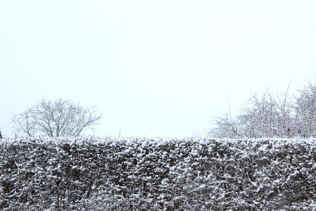 Mit Schnee bedeckte Hecke