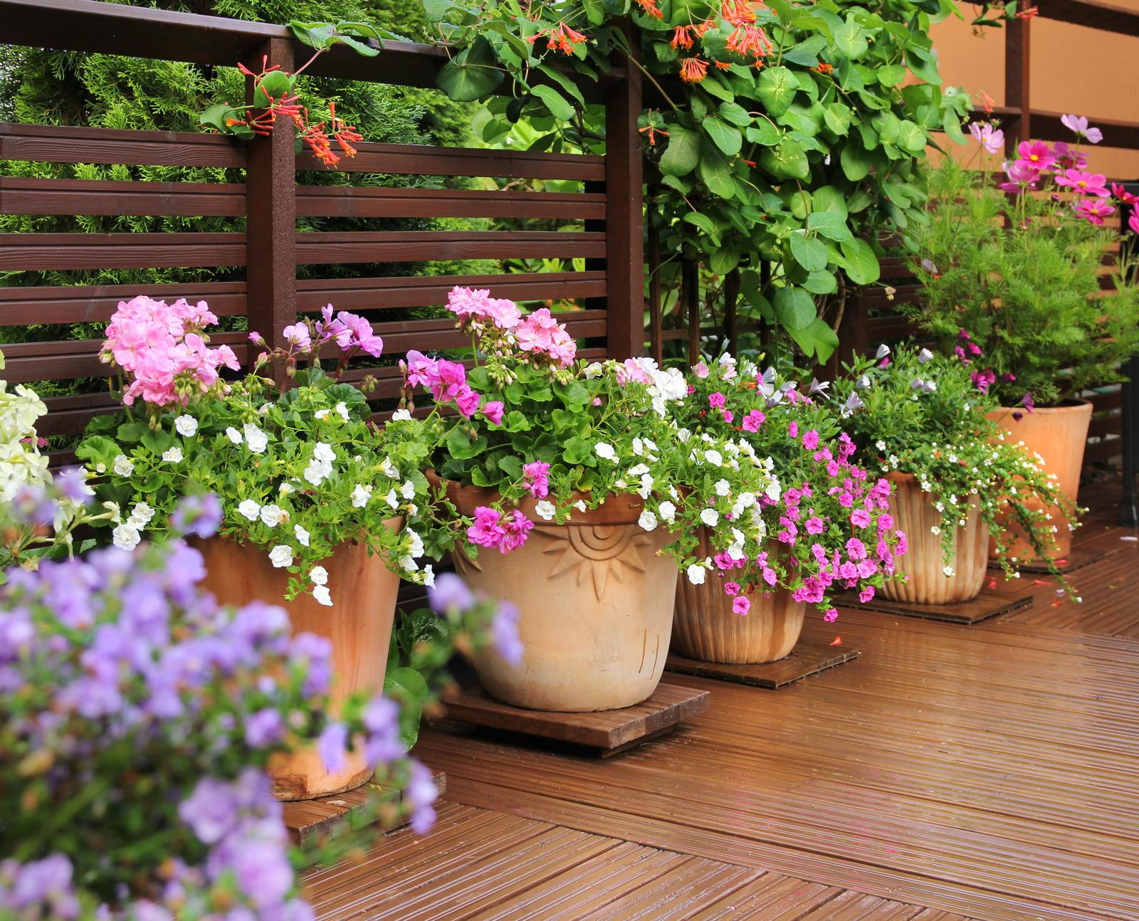 Kubelpflanzen Unsere Top 15 Fur Balkon Garten Plantura