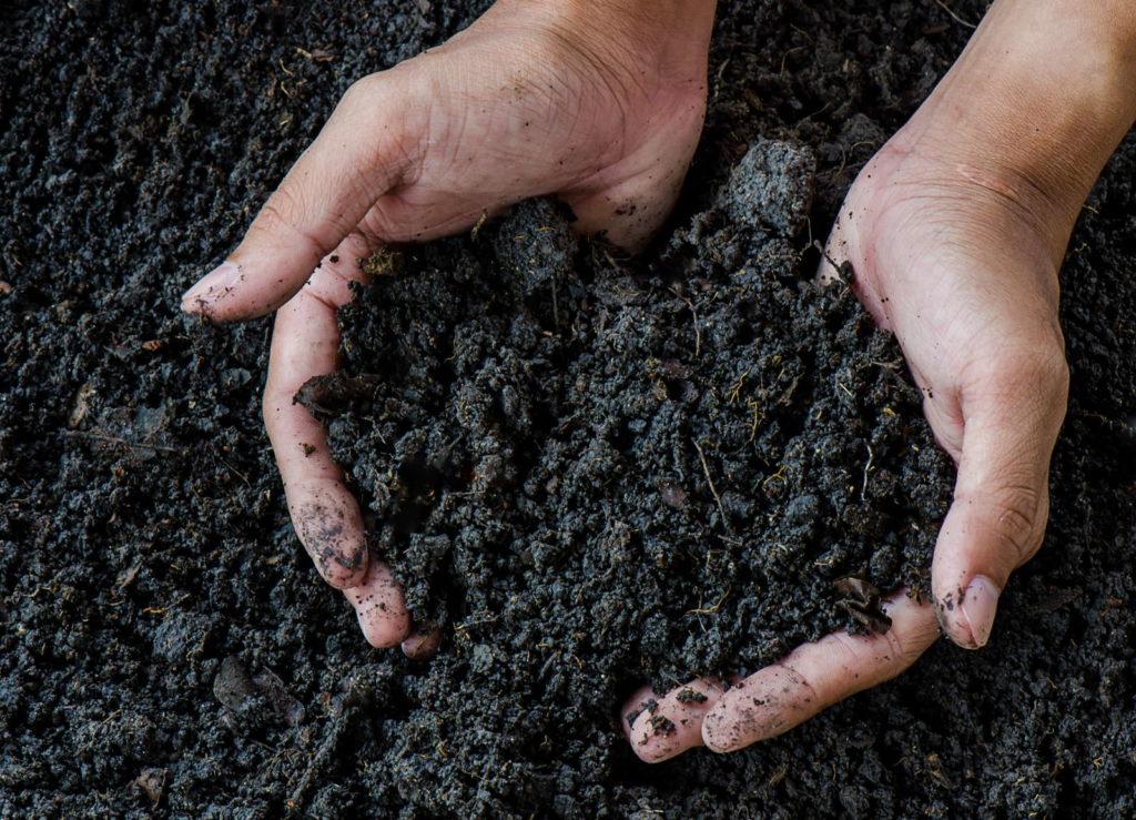 Fertiger Kompost in Händen