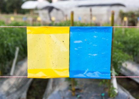 Gelb- Und Blautafel