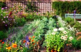Mischkultur: Welche Pflanzen passen ideal zusammen?