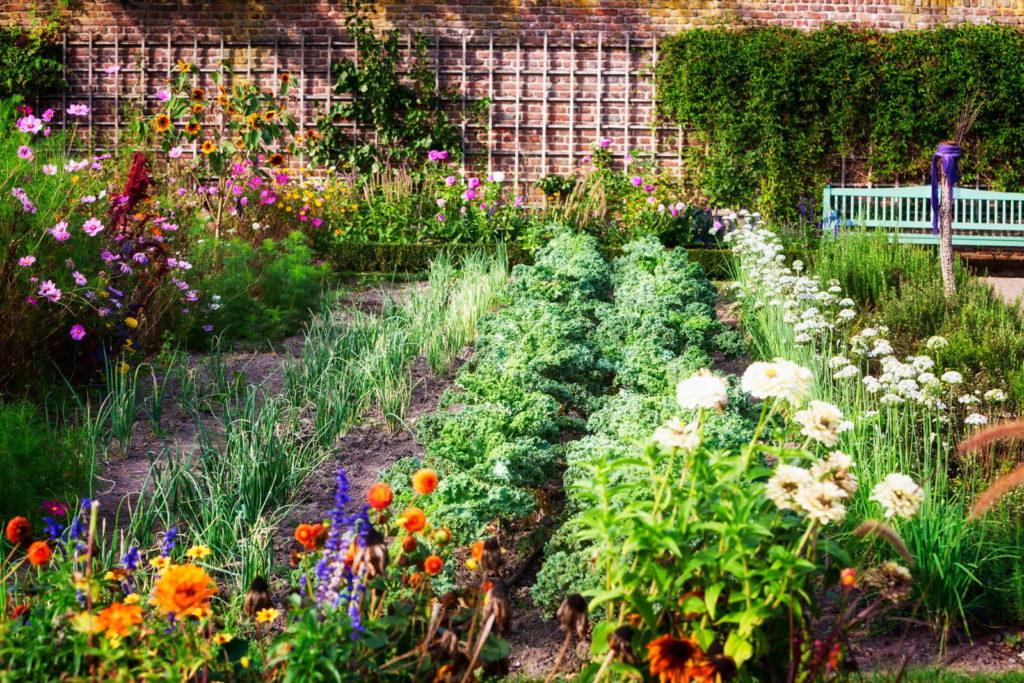 Mischkultur in einem Beet im Garten