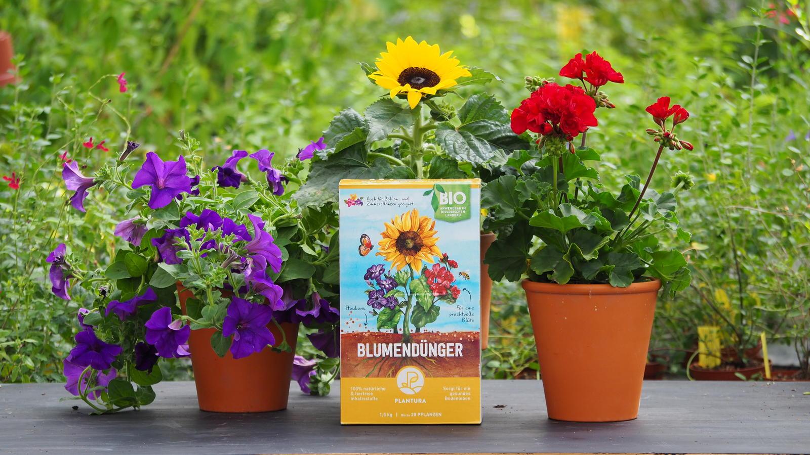 Top Hibiskus-Hecke: Tipps zu Sortenwahl, Pflanzung & Pflege - Plantura FG39