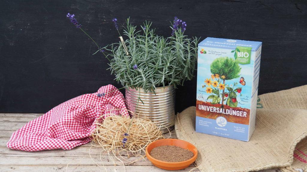 Plantura Bio-Universaldünger neben einem Lavendel im Topf