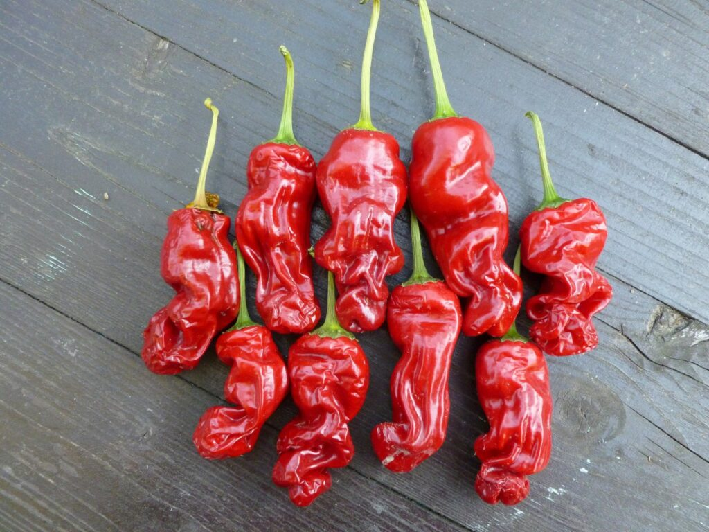 Peter Pepper Penis Chili reif