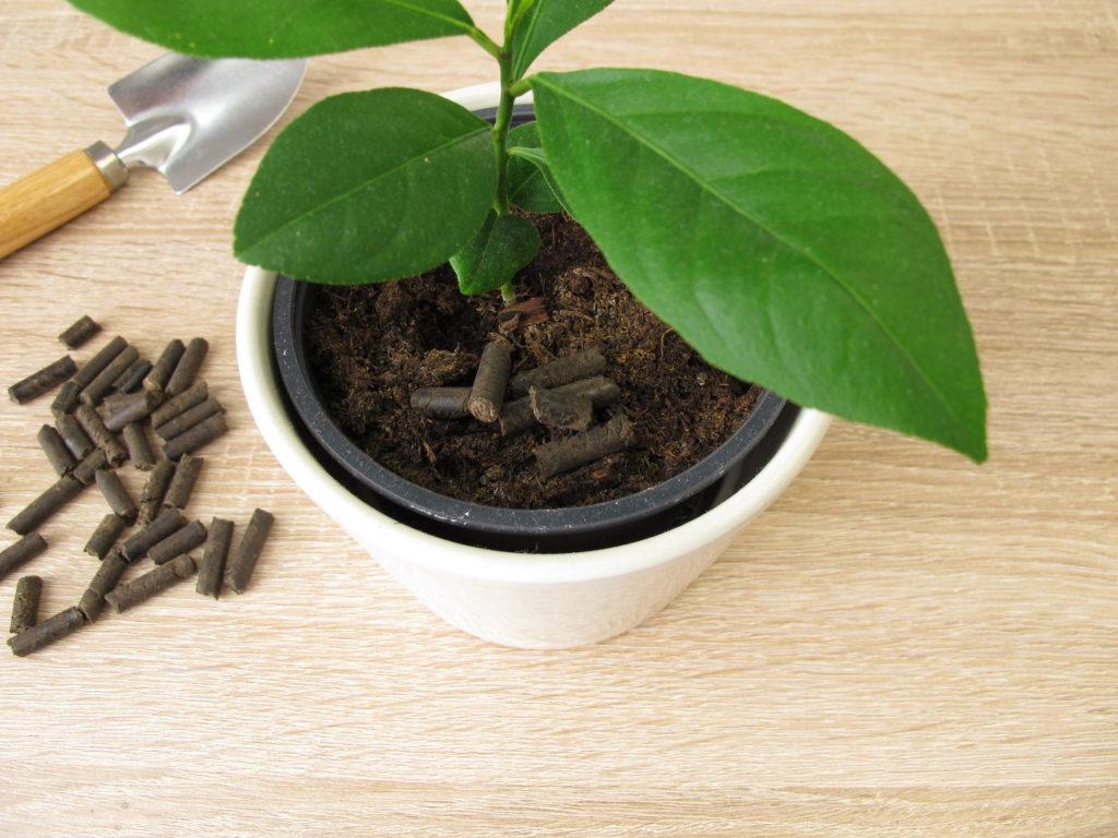 Pferdemist-Pellets mit Pflanze im Topf