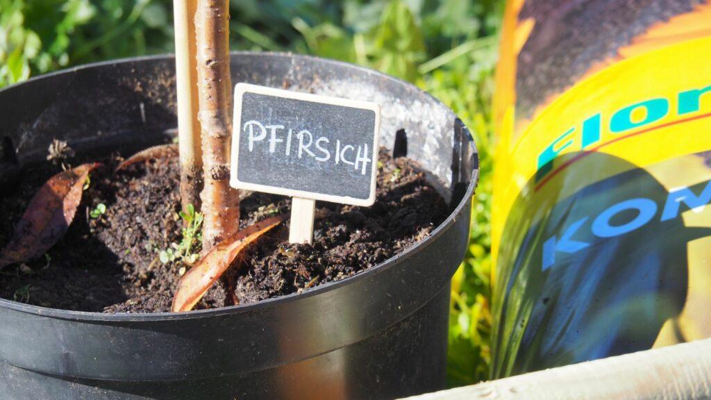 Pfirsichbaum Pflanzen: Video-Anleitung & Tipps Vom Profi