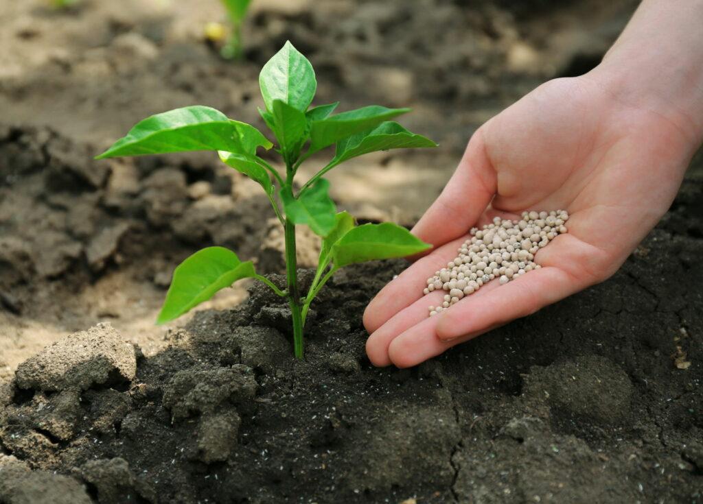 Pflanze wird gedüngt