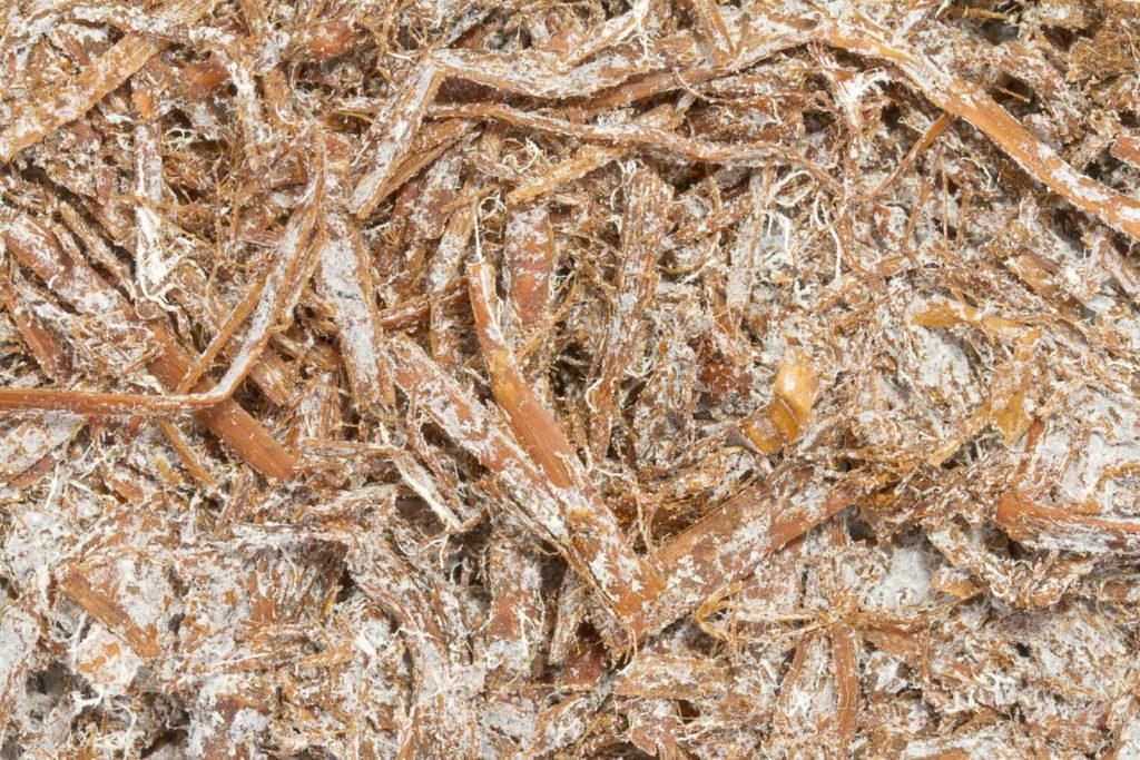 Weiße Pilzfäden auf Stroh