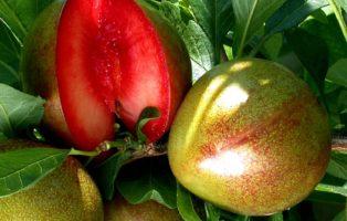 Rotfleischiges Obst: 6 Köstliche Arten & Sorten In Sattem Rot