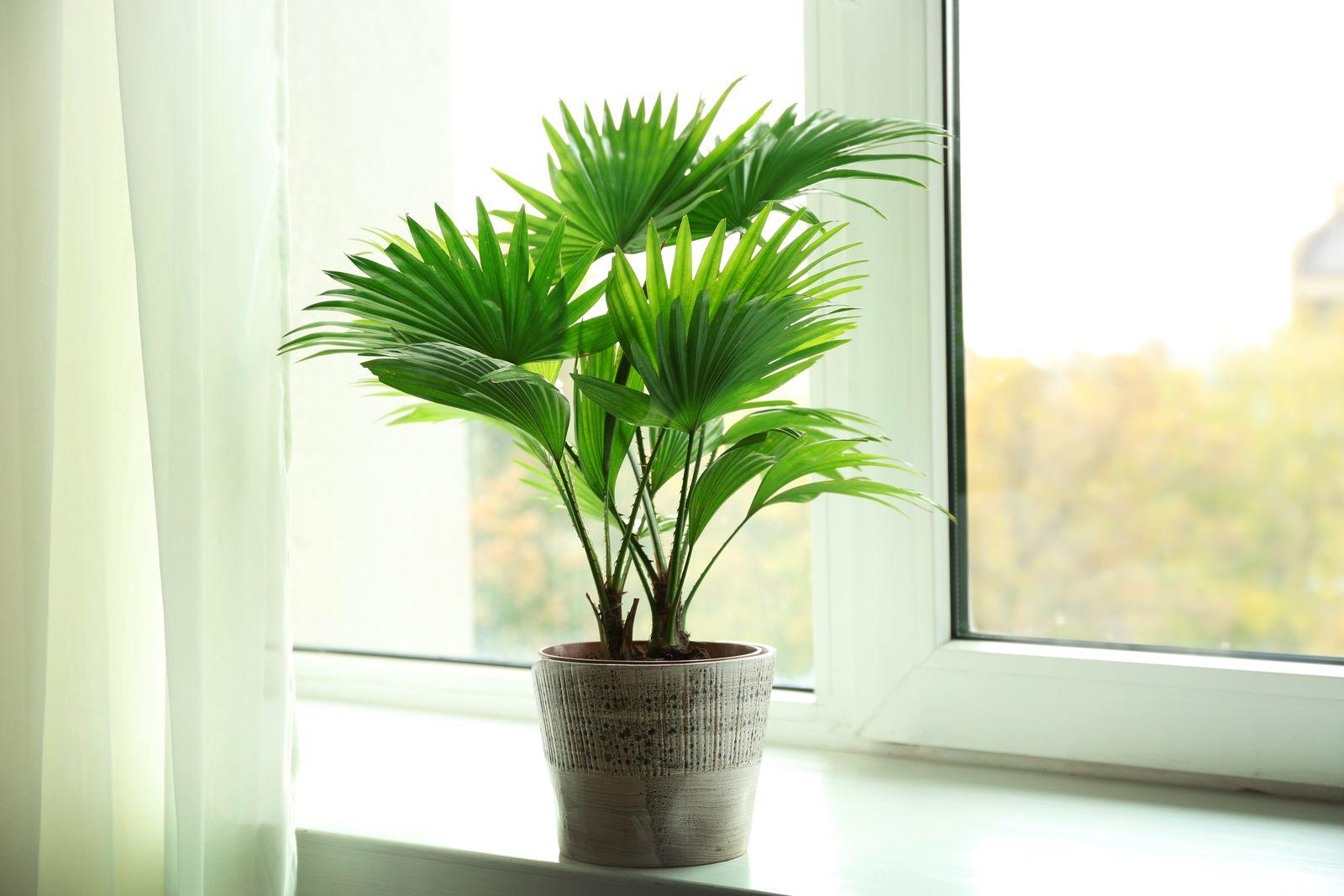 Exotische Zimmerpflanzen: 10 besondere Pflanzen für Ihr ...