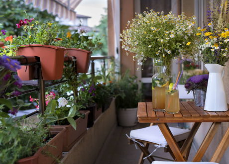 Schattiger Balkon Mit Pflanzen