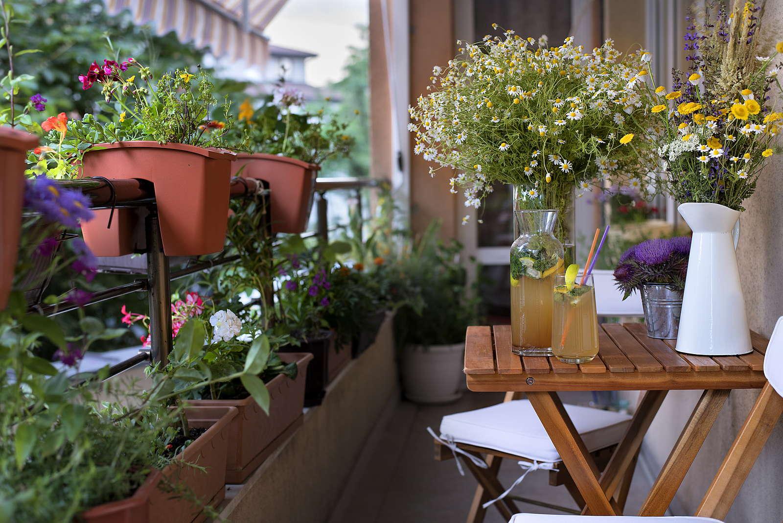 schattenbalkon die 10 besten pflanzen f r schattige lagen. Black Bedroom Furniture Sets. Home Design Ideas