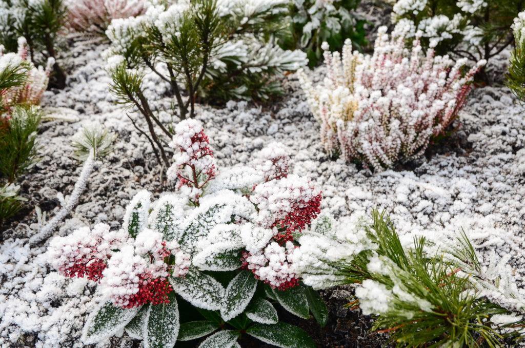 Schneebedeckte Pflanzen im Beet