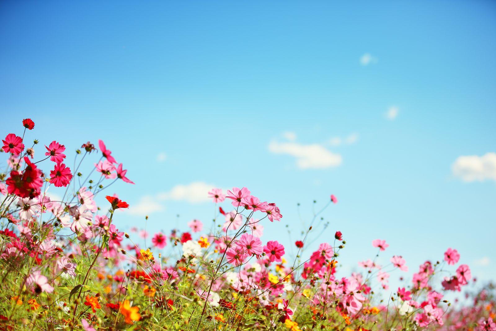 78eb2ef38ceaa7 Sommerblumen: Die 10 Schönsten für Ihren Garten - Plantura