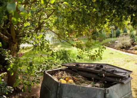 Komposthaufen Im Garten Unter Einem Obstbaum