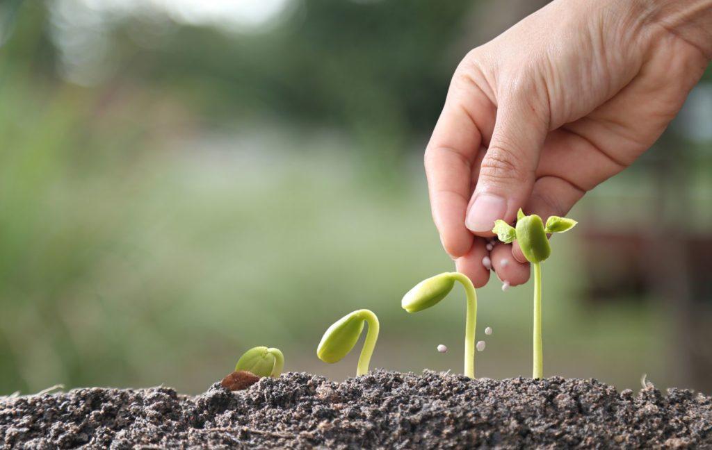 Pflanze wächst und wird gedüngt
